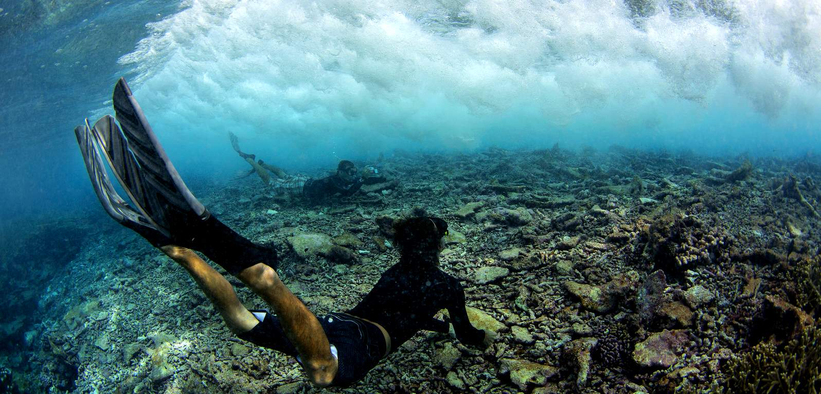 Divers photographing a dying reef