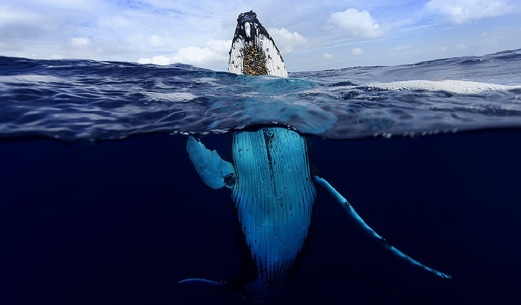 Humpback whales are dying from plastic pollution
